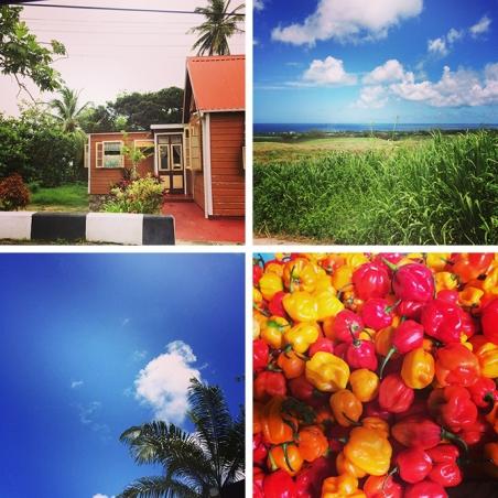 Island life in Barbados