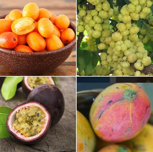 Tropical Fruit| Barbados