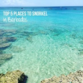 Top 5 Places to Snorkel in Barbados
