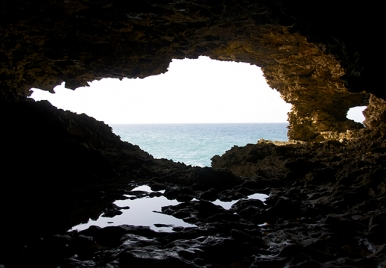 Animal Flower Cave, Barbados