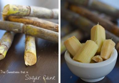 Sugar Cane Barbados