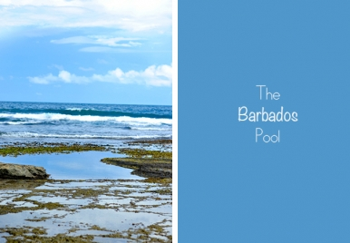 The Barbados Pool