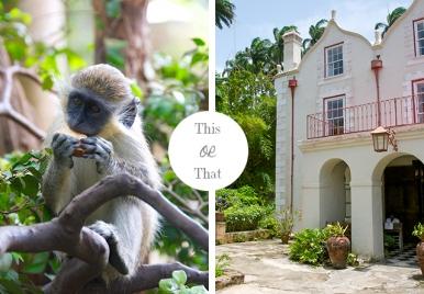 Wildlife of Barbados VS. History of Barbados