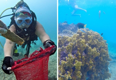 Underwater Clean Up in Barbados
